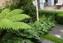 ÉCOLOGIE - Au jardin