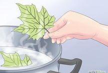 secado de hojas naturales