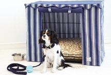 stuff for your loved pets / by Maureen Casey