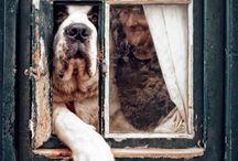 Dogs  / by Karen Zimmerman