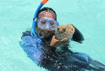 Belize Snorkel Tours - Blue Marlin Beach Resort / Experience amazing daytime and nighttime snorkel adventures as you explore pristine coral formations and encounter an array of reef fish, eagle ray, eel, octopus, shrimp, and lobster.
