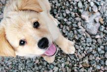 petit chien cute