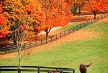 Bluegrass State