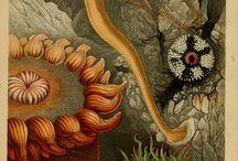 flora-fauna inspiration