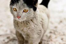 furry n cute