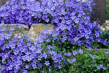 White and blue garden