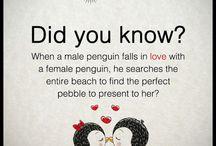 penguins <3 / PENGUINS!