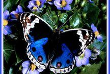 butterflies / by Rebecca Littlefield