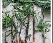 Small Palms for Small Gardens / Lady palms, bamboo palms and all of the other ones that fit in tight spaces.