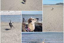 Hundeglück / Die schönsten Bilder meiner rumänischen Mischlingsdame Tinkerbell, die nun seit fast 4 Jahren mein Leben bereichert ♡