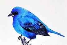 BLUE  BIRD FAMILY  ****