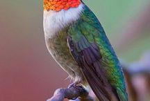 birds /   / by Ramon Arrazabal