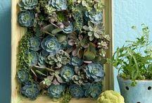 i heart succulents...