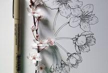 Sakura Drawing Flower Pencil