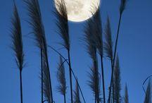 Moon & night