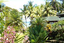 The Good Life at Playa Cativo