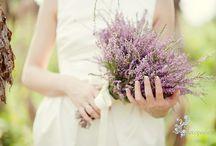 gelin çiçeği lavanta