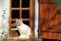 ikkuna, ovi, rappuset, patio