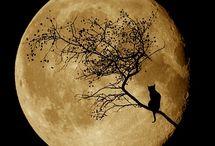 Moonkitties