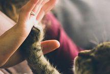 Zdjęcia z kotami