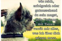 Sprüche für Tierfreunde / Tierfreunde aufgepasst. Hier findet ihr die schönsten Sprüche rund um Hund, Katze und Co.