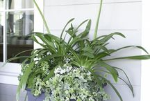 PLCO Spring containers