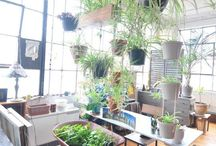 plante hænger