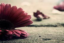 Flowers&Petals