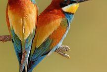 PAPUGI - ptaki