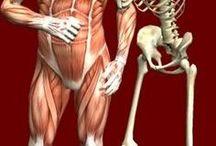 Apologia anatomy