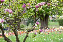Wiosna/ Spring