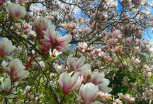 Flores/Blumen/Flowers