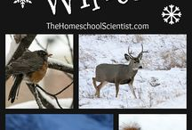 animals and winter