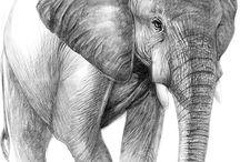 Náměty pro malbu zvířat