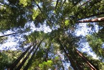 Armstrong Woods, Guerneville, California