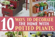 Plants decor