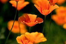 Orange flowr tat
