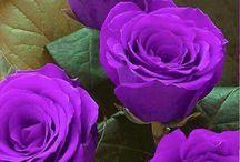 Purple love / all things purple