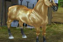 All sso horses