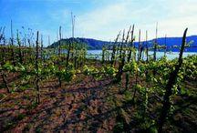 Altro che Terra dei fuochi, Noi Siamo la Terra del Vino ....