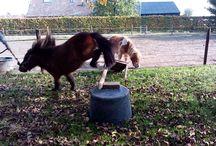 mijn pony`s
