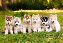 Puppies & Doggies - A human's best friend. ☺
