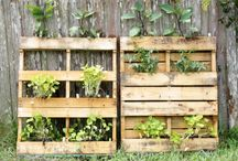 Tiny Garden / Entryway/Rooftop 1001 / by Erin Fleming