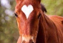 Güzel atlar