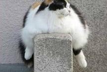 pylvään täydeltä kissaa