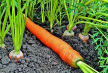 Дача сад и огород