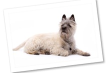 Meet the Breeds:  Dogs / by Red Bank Veterinary Hospital