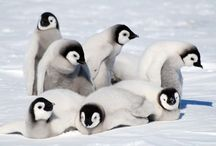 Penguins <3<3 / by Shantel Williams