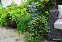 Outdoor Living Inspiration - Crescent Garden.