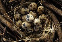 Ptačí -  birds